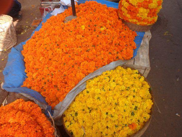 Goa food innovation
